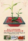 Denggi: Perayaan Tahun Baru Cina (BC)