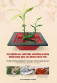 Denggi: Perayaan Tahun Baru Cina (BI)