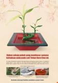 Denggi: Perayaan Tahun Baru Cina (BM)