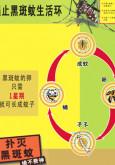 Denggi : Cegah Denggi (B.Cina)
