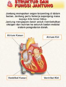 Jantung:Pameran Hari Jantung Sedunia 2000 5