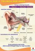 Telinga:Pameran Telinga dan Anda 1
