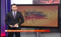 Denggi : Tiada Virus Serotip Baharu Denggi