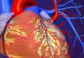 Heart Attack : What Happens During a Heart Attack